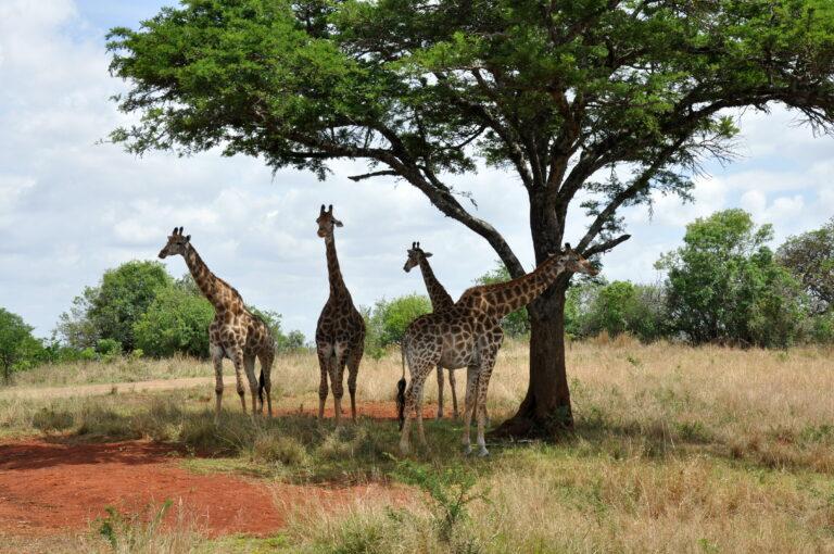 Reizen Van Laere Zuid-Afrika