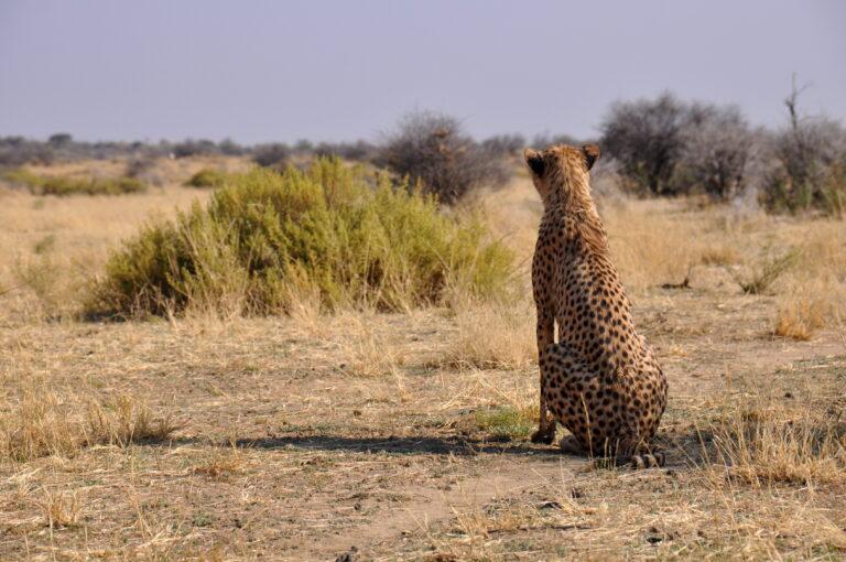 Reizen Van Laere - Namibië